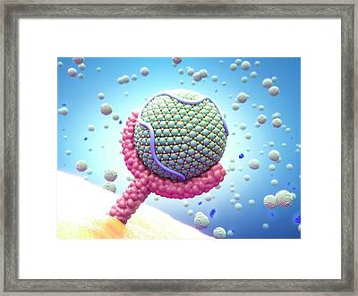 Pcsk9 And Lipoprotein Bound To Receptor Framed Print by Maurizio De Angelis