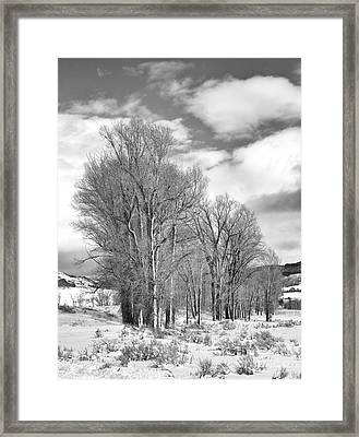 Peaceful Moments Framed Print by Sandra Bronstein