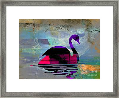 Peaceful Swan Framed Print