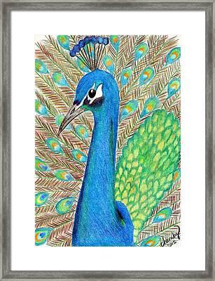 Peacock Framed Print by Carol Hamby