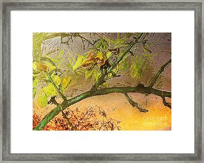 Pear Tree In The Sunset Framed Print by Odon Czintos