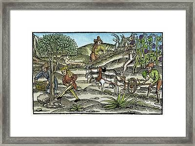 Peasants Farming, C1520 Framed Print