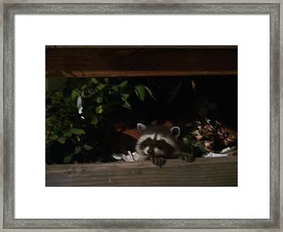 Peek-a-boo Baby Framed Print by Jacquelyn Roberts