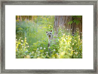 Peek A Boo Framed Print by Carrie Ann Grippo-Pike