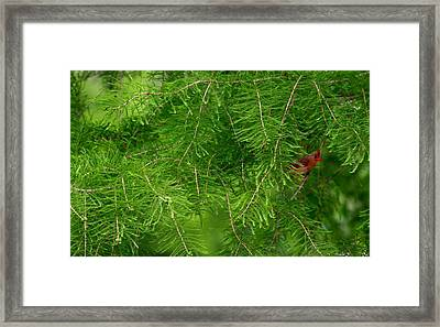 Framed Print featuring the photograph Peek A Boo by Elizabeth Winter