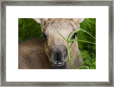 Peek A Boo Framed Print by Ted Raynor