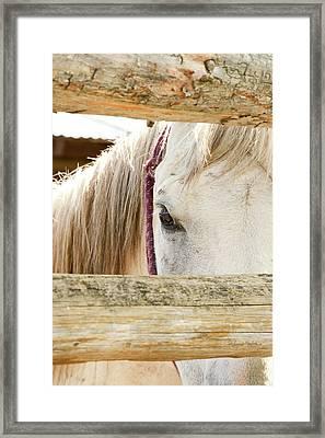 Peek Framed Print by Ramona Murdock