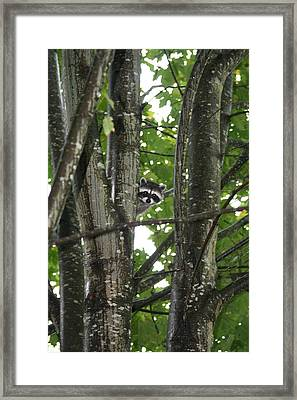 Framed Print featuring the photograph Peeking At Me by Myrna Walsh