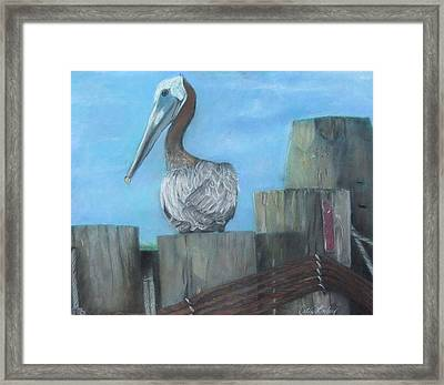 Pelican At Hatteras Ferry Framed Print by Cathy Lindsey