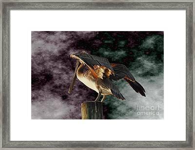 Pelican On Post Framed Print