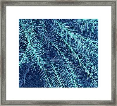 Penguin Feather Framed Print by Steve Gschmeissner