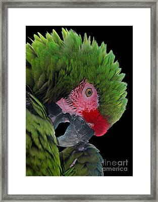 Pensive Parrot Framed Print