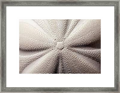 Pentagonal Symmetry Echinoid Sea Biscuit Framed Print by Paul D Stewart