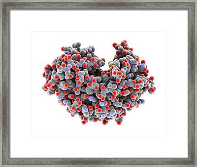 Pepsin Stomach Enzyme Framed Print by Science Photo Library