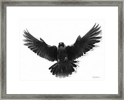 Peregrine Falcon Framed Print by Wayne Bonney