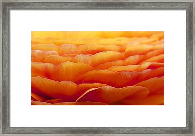 Framed Print featuring the photograph Petal Landscape by Colleen Williams