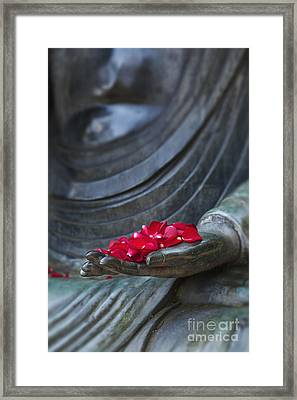 Petals Of Peace  Framed Print by Tim Gainey