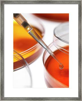 Petri Dishes And Pipette Framed Print