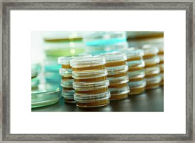 Petri Dishes In A Stack Framed Print