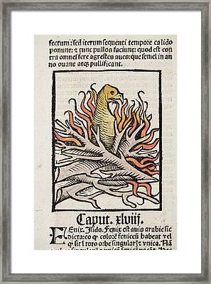 Phoenix Framed Print by Paul D Stewart