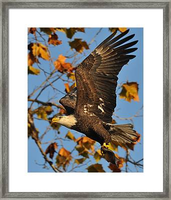 Photographer Framed Print by Angel Cher