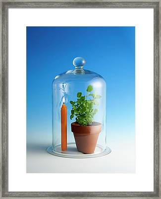 Photosynthesis And Carbon Dioxide Framed Print