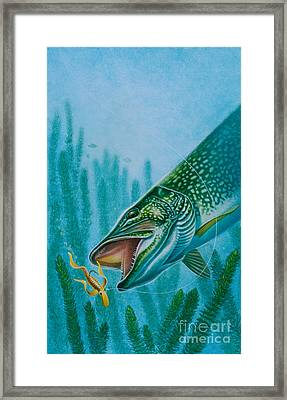 Pike And Jig Framed Print by Jon Q Wright
