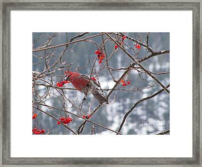 Pine Grosbeak And Mountain Ash Framed Print by Leone Lund