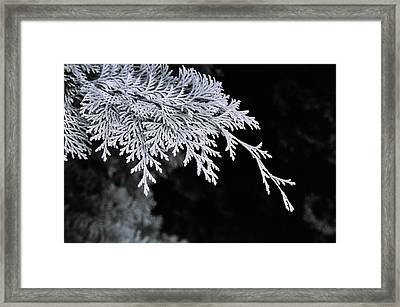 Pine Needles Framed Print by Christopher Lugenbeal