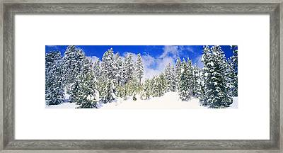 Pine Trees On A Snow Covered Hill Framed Print