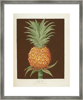 Pineapple Framed Print by British Library