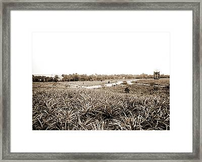 Pineapples At Eden, Jackson, William Henry, 1843-1942 Framed Print by Litz Collection
