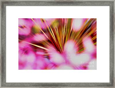 Framed Print featuring the photograph Pink Alium by Rebeka Dove
