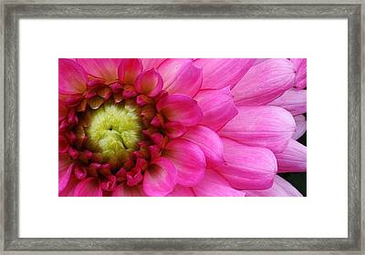 Pink Beauty Framed Print by Bruce Bley