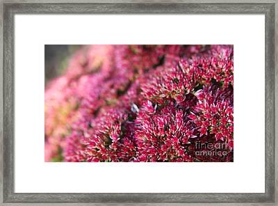 Pink Flower Bouquet Framed Print by Jolanta Meskauskiene