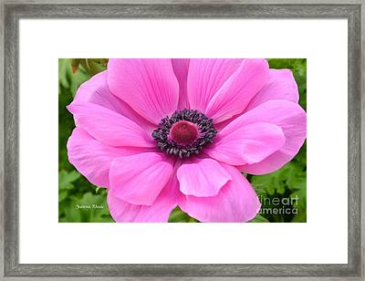 Framed Print featuring the photograph Pink Flower by Jeannie Rhode