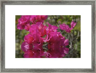 Pink Flowers Framed Print by Aged Pixel