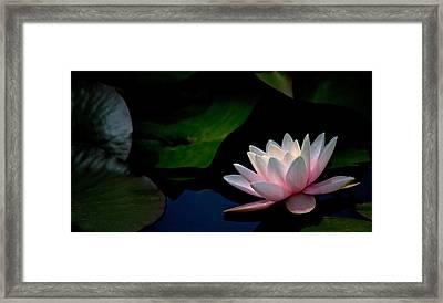Pink Glow Framed Print by Rebecca Cozart