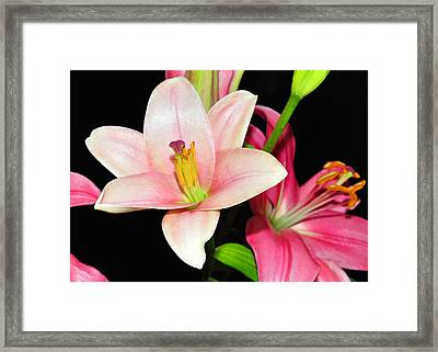 Framed Print featuring the photograph Pink Lilies by Lula Adams
