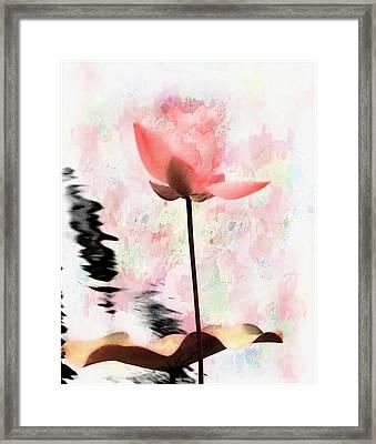 Pink Lotus Framed Print by Carol Kinkead