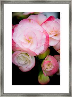 Pink Paradise 1 Framed Print
