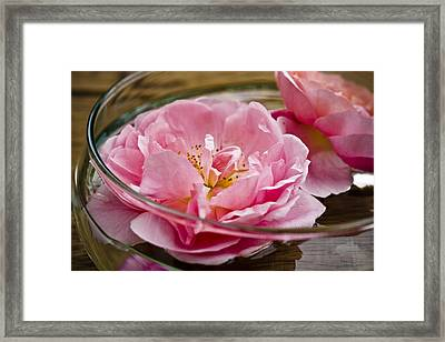 Pink Roses Framed Print by Frank Tschakert