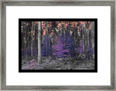 Pink Sky Framed Print