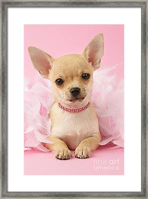 Pink Times Framed Print by Greg Cuddiford