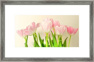 Pink Tulips Framed Print by Sharon Lisa Clarke