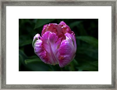 Pinklette Framed Print