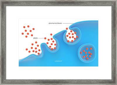 Pinocytosis Framed Print