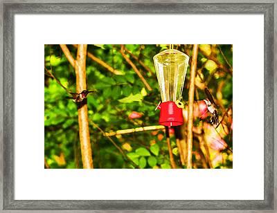 Hummingbirds - In Flight - Pit Stop Framed Print by Barry Jones