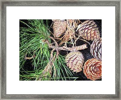Pitch Pine Cone Framed Print by Susan Carella