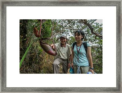 Pitcher Plant Growing In Kinabalu Np Framed Print